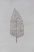 Caroline Younger: Leaf 1, 2016