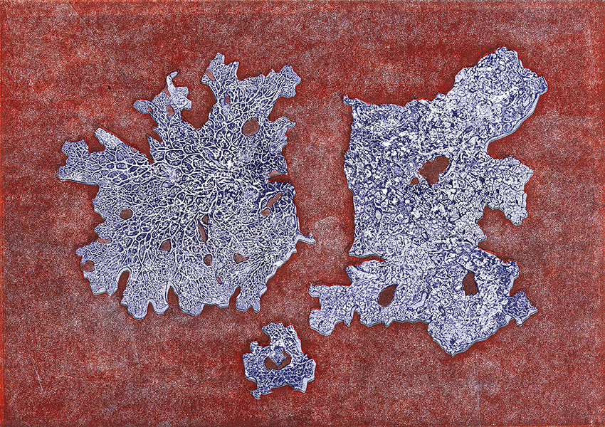 Caroline Younger: Purple Lichens on Red, 2019